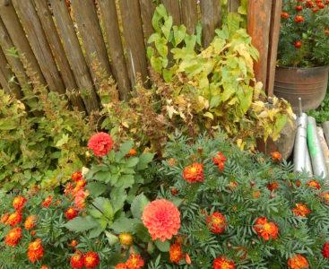 FIO – Wieś pachnąca ziołami